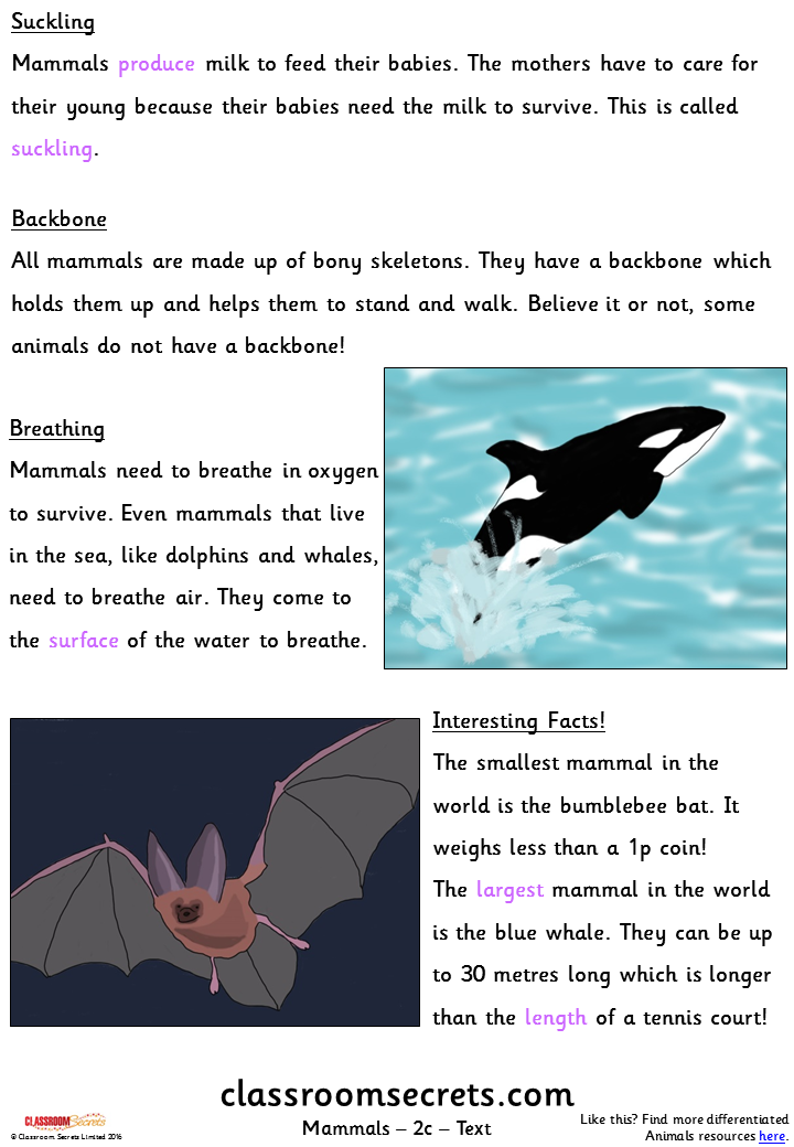Mammals (Y1m/Y2d/Y3e) Guided Reading Pack